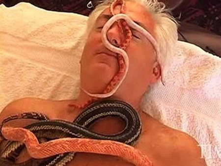 lam dẹp bàng rắn