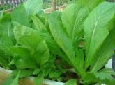 Những loại rau củ mùa hè nếu ăn nhiều sẽ gây hại