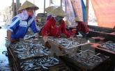 Tin an toàn thực phẩm hot ngày 11/6: Phát hiện 30 tấn cá nục có chất cực độc, tuyệt đối cấm