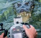 Mạo hiểm bơi trước hàm cá sấu