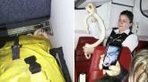 Rắn bị bỏ quên trong ngăn để hành lý trên máy bay