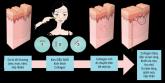 Sự kì diệu về liệu pháp tế bào gốc trong ngành thẩm mỹ