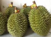 Mách bạn cách chọn sầu riêng ngon, nhiều cơm ít hạt