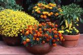 Top hoa cây cảnh nên trồng ngay để kịp đón Tết