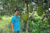 Mít Thái lên cơn sốt: 1,4 triệu/quả, cả vườn thu 1,1 t ỷ