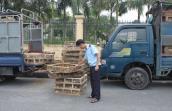 Gà lậu Trung Quốc lại tràn vào Việt Nam