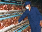 Hại người chăn nuôi, lừa người tiêu dùng