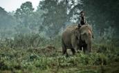 Đến Thái Lan, uống cà phê phân voi giá 50 USD