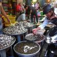 Lại phát hiện virus độc hại trong hải sản tươi sống
