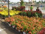 Những thiên đường hoa bậc nhất Việt Nam