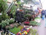 Chợ hoa nổi duy nhất trên thế giới tại Amsterdam.