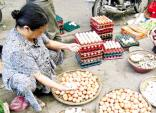 Trứng gà nhập lậu từ Trung Quốc giá 500 đồng/quả: Nguy cơ từ gà nhiễm dịch