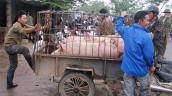 Độc đáo chợ lợn lớn nhất Việt Nam