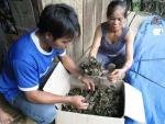 Thương lái TQ giở trò thu mua nấm độc, cỏ dại