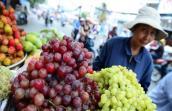 Phân biệt nho Trung Quốc với nho Mỹ, nho Việt Nam