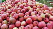 Lại phát hiện thêm táo, hồng nhiễm độc