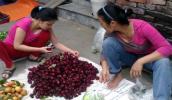 Hà Nội: Cơn sốt ngâm hoa bụp giấm chữa bách bệnh