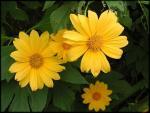 Những cung đường lý tưởng ngắm hoa dã quỳ ở Đà Lạt