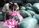 TP.HCM: Hàng tấn băng vệ sinh bị độn chất lạ