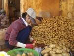 Cách biến khoai tây Trung Quốc thành hàng Đà Lạt