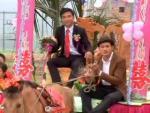Đám cưới rước dâu bằng xe ngựa tại Hà Tĩnh