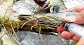 6 loại thủy hải sản
