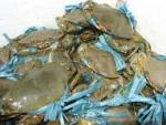 Hà Nội thị trường tiêu thụ thủy sản  bị 'ăn' kim loại?