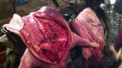 Thịt ôi, cá chết được chế biến ngon lành tại nhà hàng, quán cơm