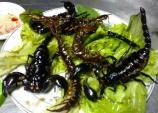 Những món đặc sản được làm từ...côn trùng