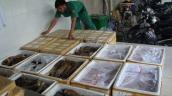 Thịt bẩn nhập ngoại tràn vào thị trường Việt Nam