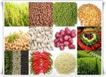 Giá cả thị trường trong nước của các mặt hàng nông sản