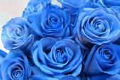 Hoa hồng dài 1,6 m giá 700.000 đồng hút khách Sài Gòn