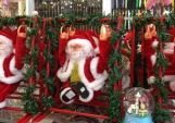 Thông thật mini đắt khách mùa Noel