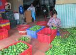 Sài Gòn nắng nóng, giá chanh, dừa tươi tăng cao ngất ngưởng