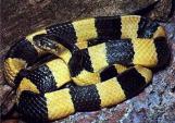 Hà Nội: Giám đốc cho thả hàng trăm rắn độc để trả thù