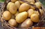 Mẹo chọn và chế biến khoai tây đúng cách