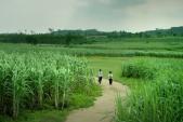 Những địa danh đẹp hút hồn trên phim Việt