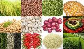 Giá một số nông sản tiếp tục sụt giảm