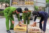 Xử lý gà thải nhập lậu: Cần