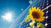 Thu hồi tấm lợp pin năng lượng mặt trời gây hỏa hoạn