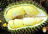 Lợi bất cập hại từ trái sầu riêng