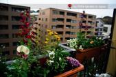 Mê mẩn ngắm vườn ban công 3m2 của du học sinh tại Nhật Bản