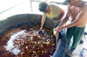 Dầu bẩn Đài Loan đã được bán vào Việt Nam