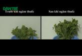 Hóa chất lạ trong thực phẩm Việt