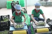 Bàn cách diệt 'rau sâu' để xuất khẩu sang EU