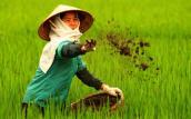 Hơn 50% phân bón Việt Nam nhập khẩu có xuất xứ từ Trung Quốc