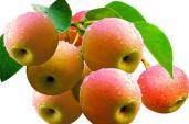 5 loại quả không nên ăn ngay sau khi thu hoạch