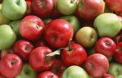 Mẹo phân biệt táo Trung Quốc và táo Mỹ