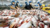 Nhiều doanh nghiệp chế biến cá tra đóng cửa
