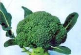 Cách dùng thực phẩm thông minh ngừa ung thư tối đa